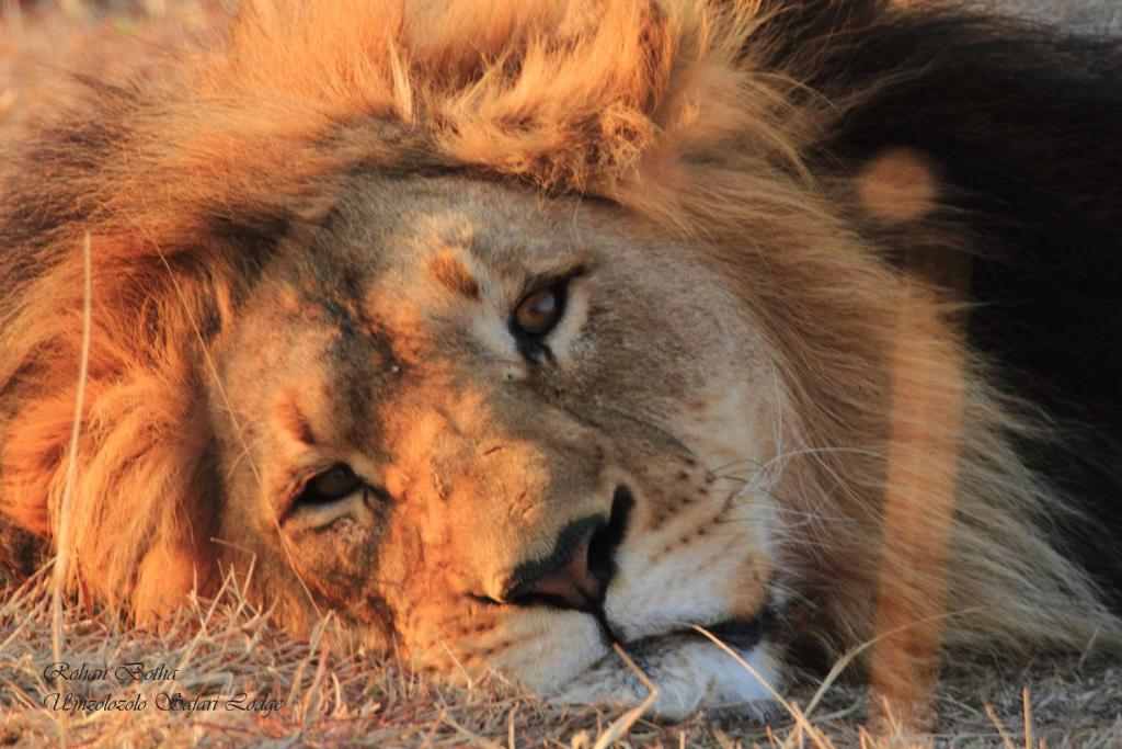 Pet or pets staying with guests at Umzolozolo Private Safari Lodge & Spa