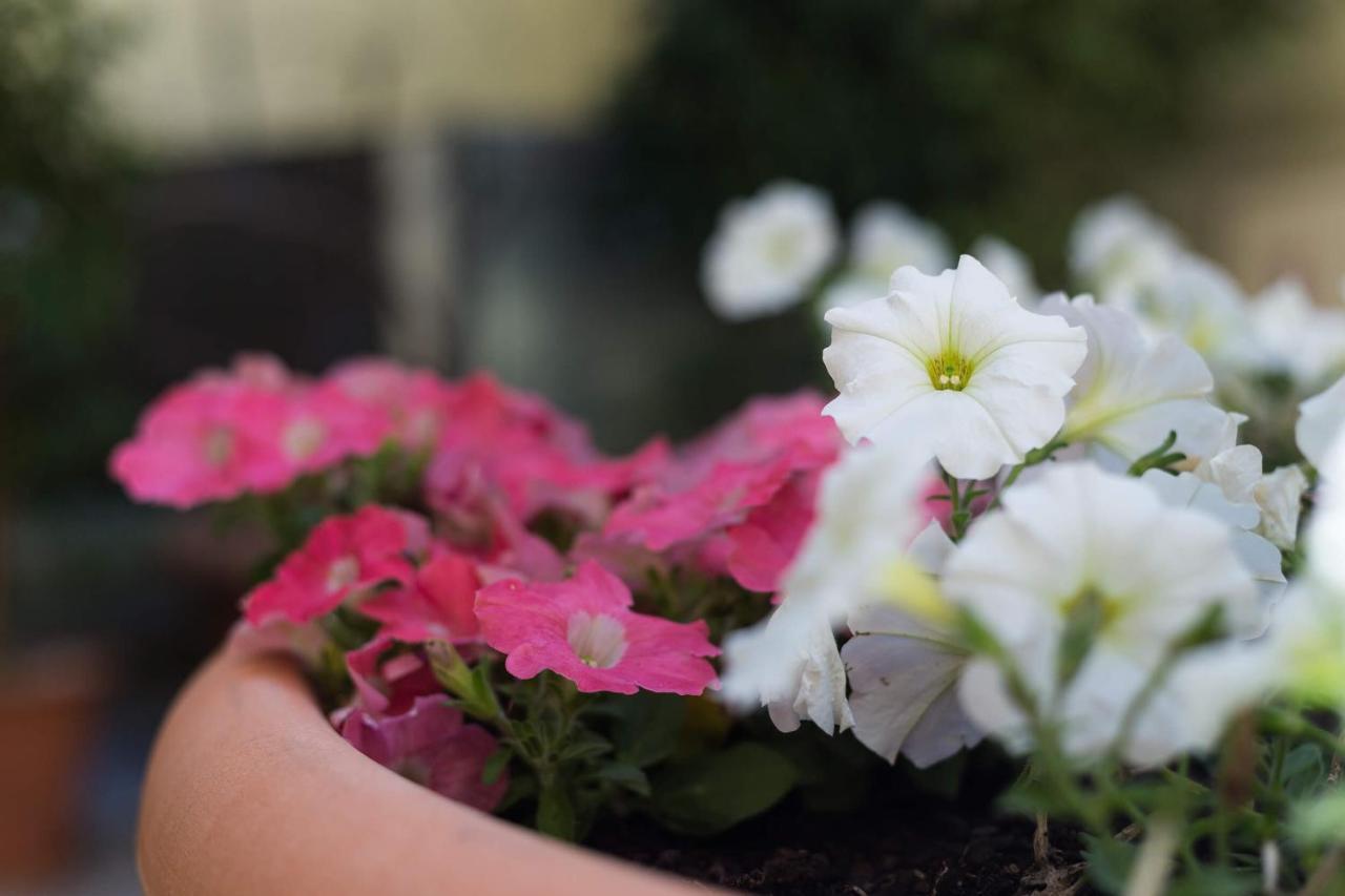 Residencial Florescente - Laterooms