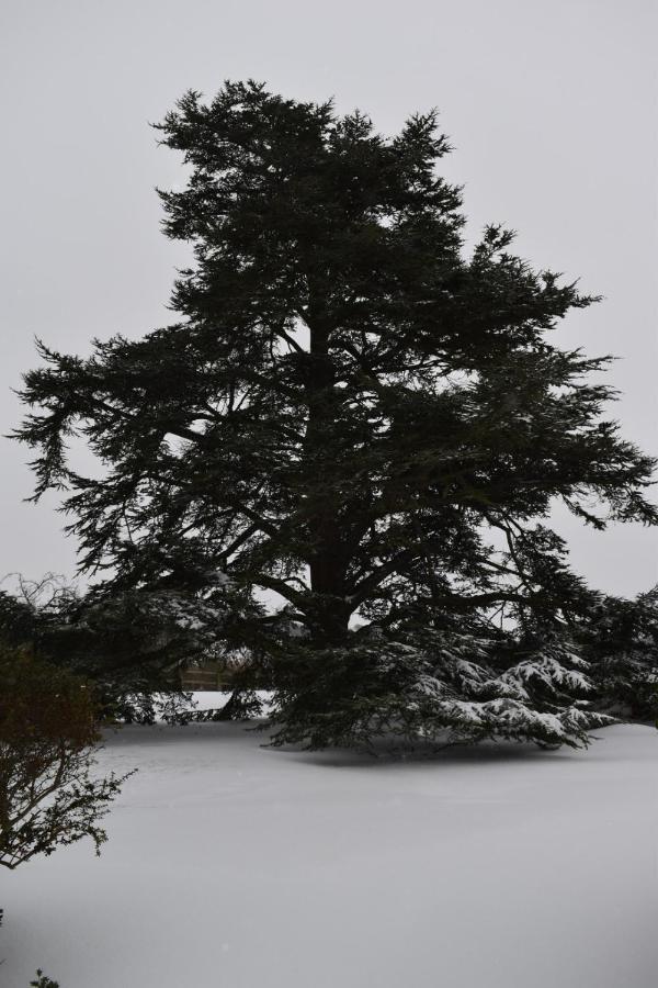 Cedar House - Laterooms