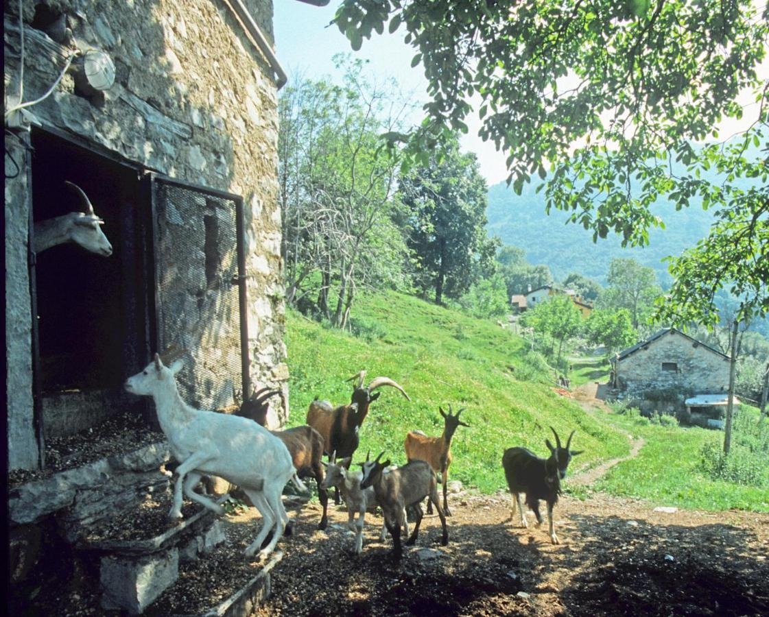 Agriturismo Al Marnich - Laterooms