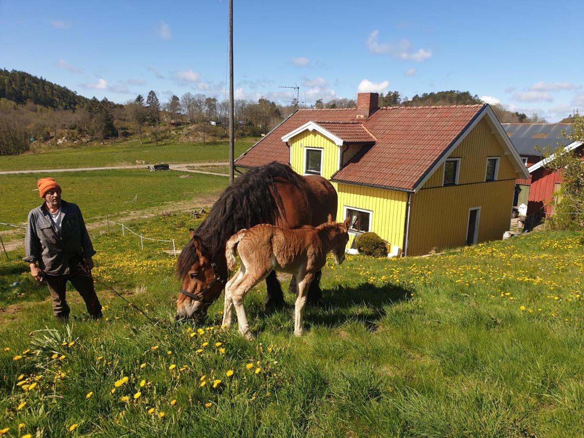 Bergsmonument och boplatser i Jörlanda