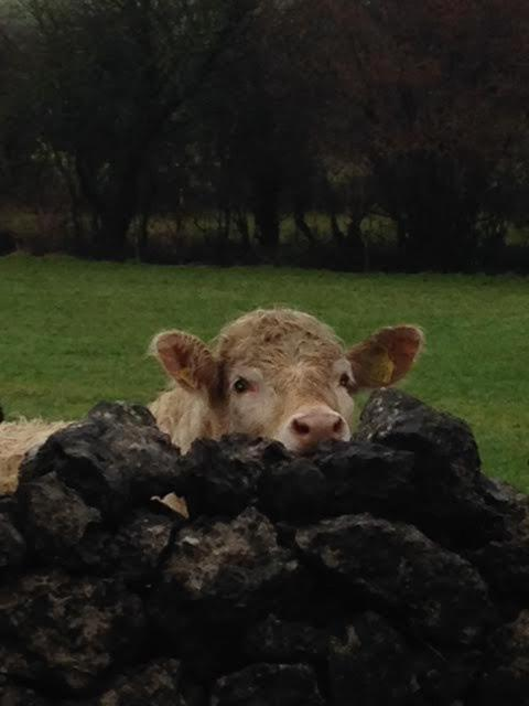 Beaconsfield Farm - Laterooms
