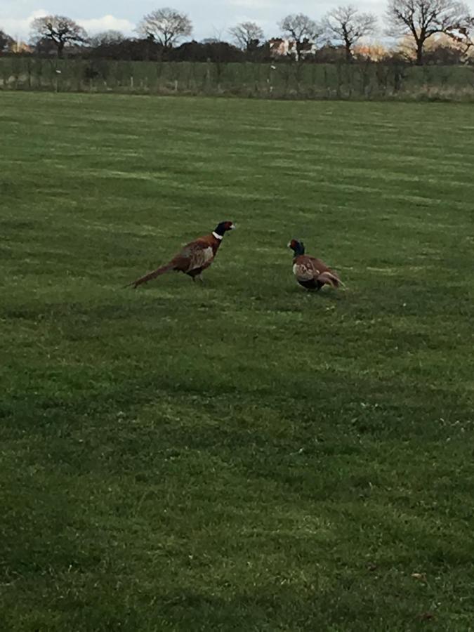 Pheasant Suites - Laterooms