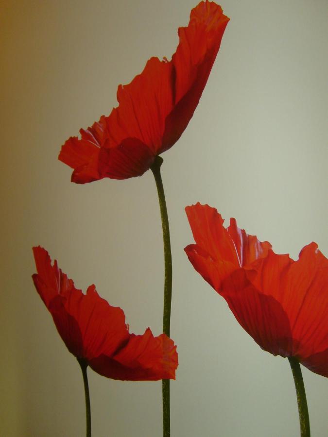 Flora Glen Guest House - Laterooms