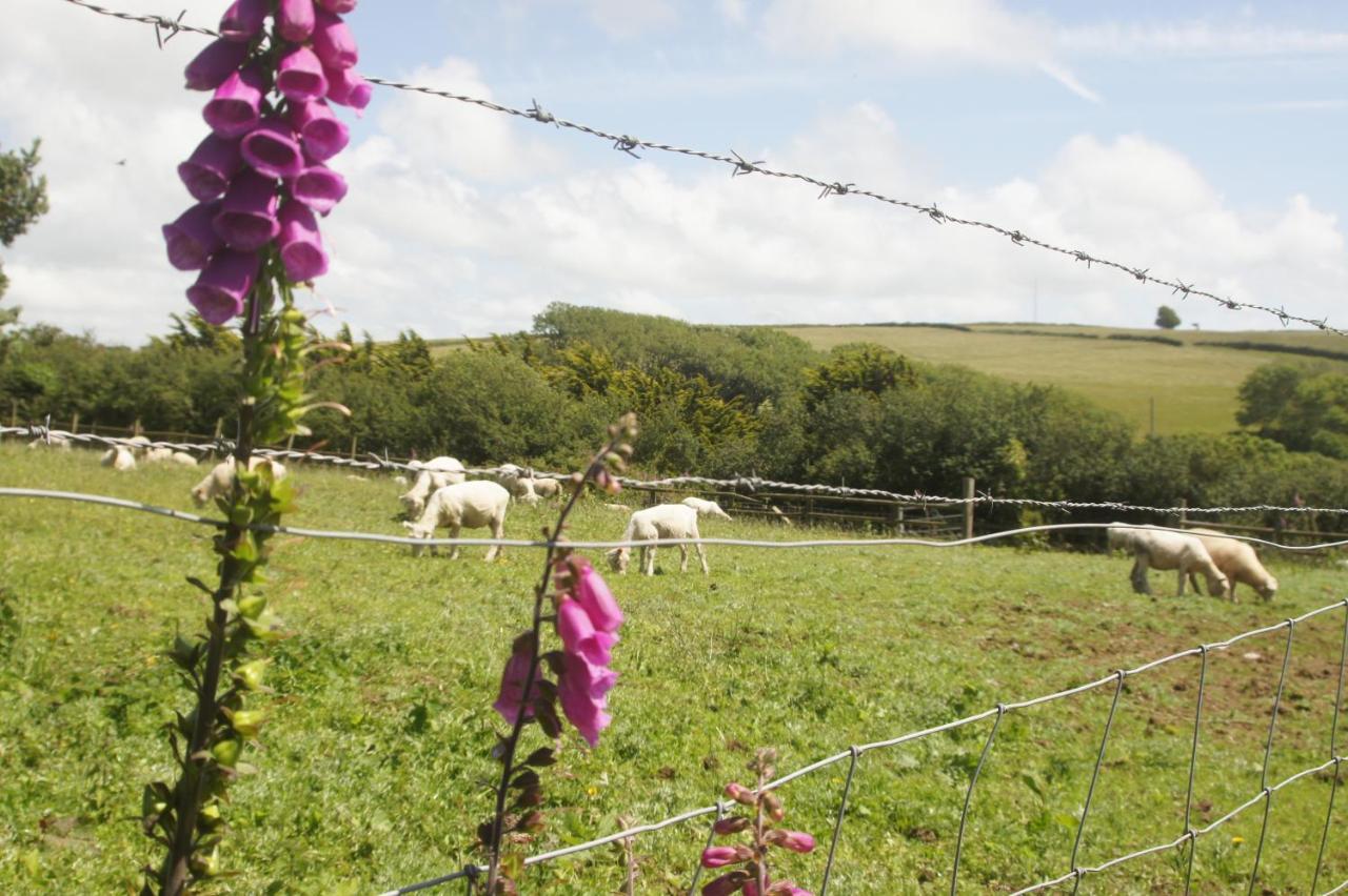 Mullacott Farm - Laterooms