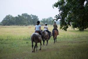 Катание на лошадях на территории фермерского дома или поблизости