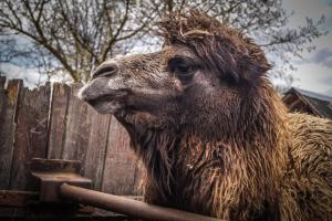 Животные в фермерском доме или окрестностях