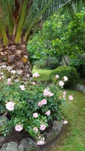 A garden outside Franklyn Guesthouse