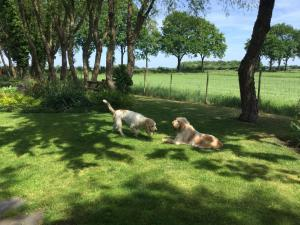 Pet or pets staying with guests at De Porrepoele