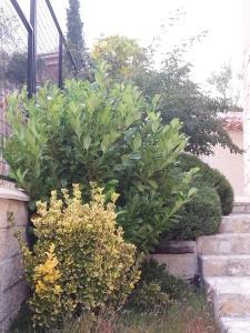 A garden outside La Tejada del Valle