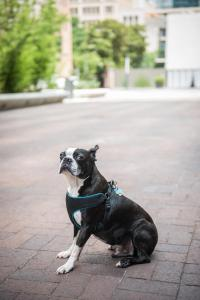 Pet or pets staying with guests at Magnolia Hotel Downtown Dallas