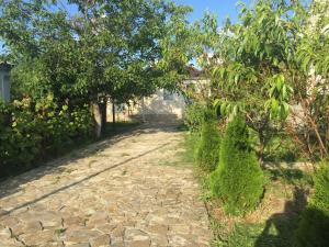 Сад в Дом Фруктовый сад