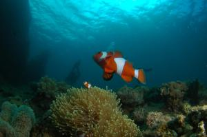 Snorkeling and/or diving at the resort or nearby