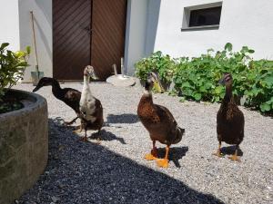 Животные in lodge или окрестностях