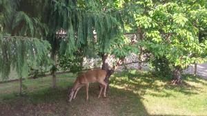 Animals at the bed & breakfast or nearby