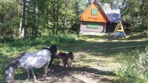 Zvieratá v horskej chate alebo blízkom okolí