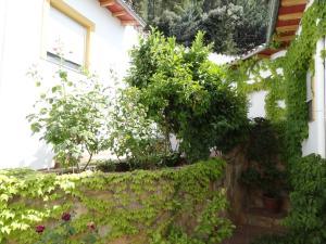 Jardín al aire libre en Apartamentos Arroyo Parrilla