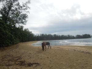Animals at the resort or nearby