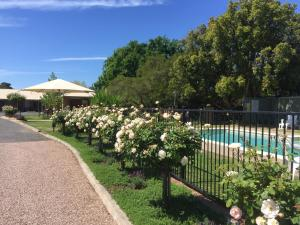 The swimming pool at or near Wine Village Motor Inn