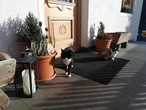 Pet or pets staying with guests at Bigraberhof