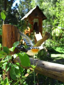 Animales en the country house o alrededores
