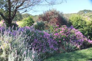 A garden outside Anderida
