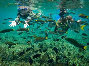 Attività di snorkeling o immersioni presso il resort o nelle vicinanze