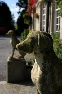 Pet or pets staying with guests at Ty Newydd Country Hotel