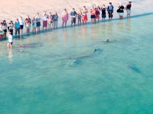The swimming pool at or near RAC Monkey Mia Dolphin Resort