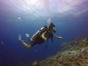 Snorkeling and/or diving at the guest house or nearby