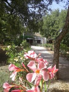 Jardín al aire libre en Camping Genal