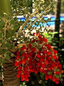 A garden outside Estelar Playa Manzanillo - All inclusive