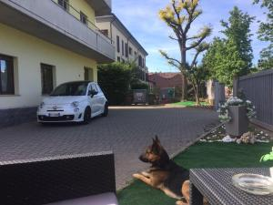Pet or pets staying with guests at Nuovo Hotel Vigevano