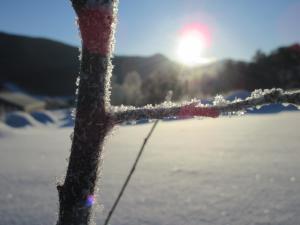 Toftemo Turiststasjon om vinteren