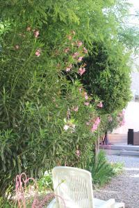 A garden outside Hotel restaurant MARTINEZ