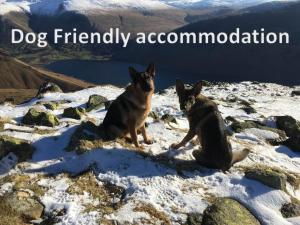 Pet or pets staying with guests at Gosforth Hall Inn