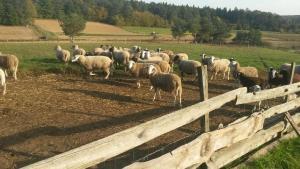 Tiere in diesem Bauernhof oder in der Nähe