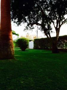 A garden outside Le Cinq