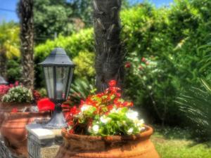 Κήπος έξω από το Hotel Niko Paradise