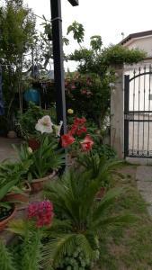 A garden outside B&B Molly