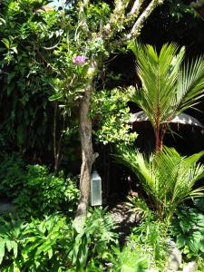 Ein Garten an der Unterkunft Ning Homestay