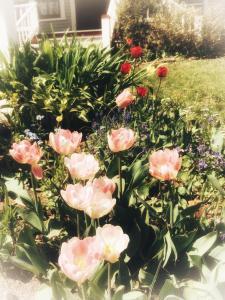 A garden outside Elmwood Heritage Inn