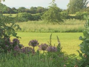 A garden outside Eydon B&B