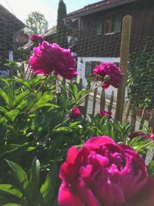 Ein Garten an der Unterkunft Chalet Alpenrose