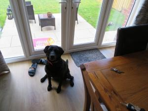 Pet or pets staying with guests at Cornerhouse Guesthouse