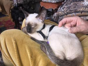 Pet ou pets ficando com hóspedes em Chiswick Riviera
