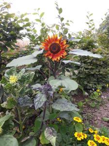 A garden outside Bingers kleine Scheune