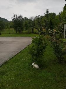 Градина пред Къща за Гости Балкански Кът
