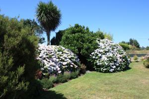 A garden outside Les Camelias