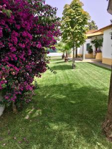 A garden outside Vitoria's House